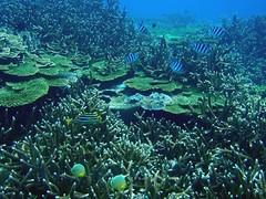 南方四島是重要的海洋資源種原庫。(圖片來源:海管處)