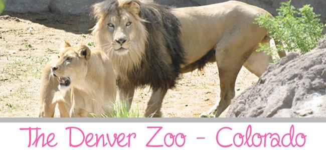 Denver Zoo 650x300