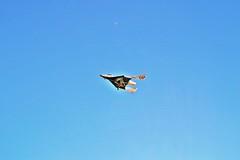 VSS Enterprise glides through the Mojave skies. Photo by Chris Van Pelt