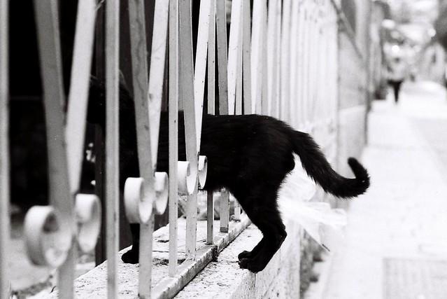 Кот в заборе