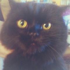 day 29: soft (kitty, warm kitty, little ball of fur. purr purr purr!)