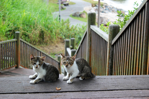 Kittens at the Broadwalk
