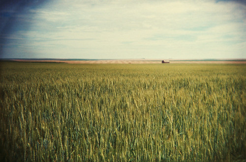 waves of grain - holga by Lady Miss Elle