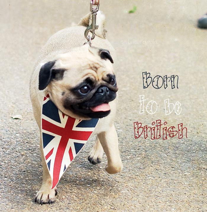 Born to be British