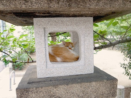日本の夏、灯籠の猫