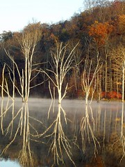 Reflection of Tree Skeletons
