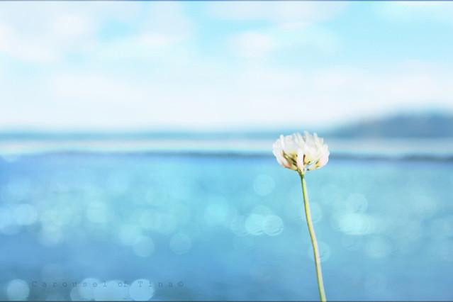 Contemplando Burbujitas de Mar!