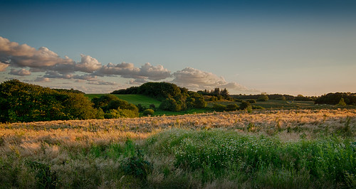The Green Field by noergaard