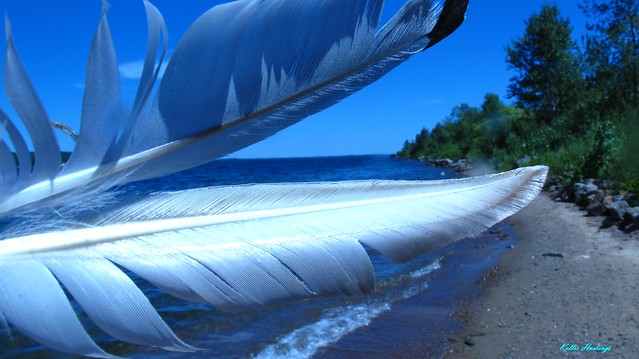 Giant Seagul Feathers On Beach-Kellie Hastings