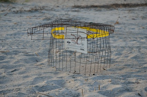 Protecting the Sea Turtle Nests