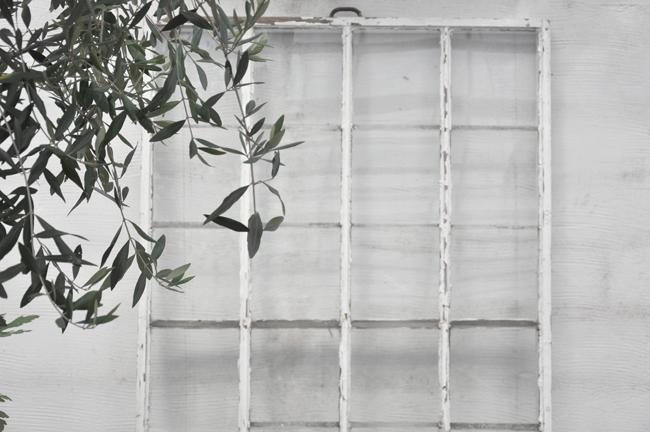 olivträd och gammalt fönster