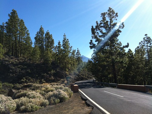 Teide Through the Forest