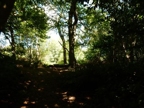Not ut of the woods yet