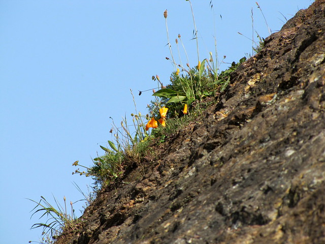 Bernal chert with poppies