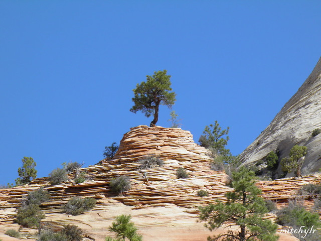 Trees & Rocks 3