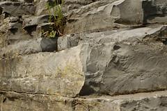Calcaire de la falaise, Parc de la Chute-Montmorency