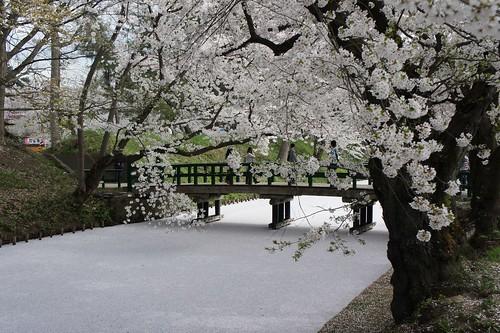 弘前公園のお堀は桜でいっぱい