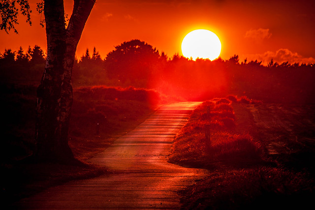 The road to sunset 1
