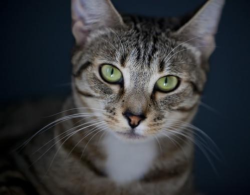 Neko the Cat 1
