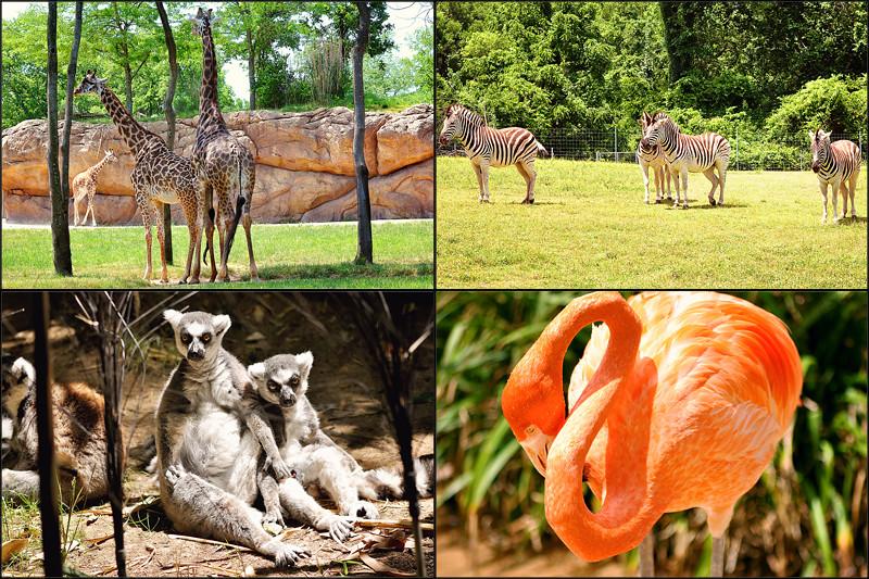 animal blog5