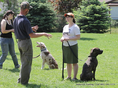 Training Your Dog – A Simple Way To Establish A Proper Relationship