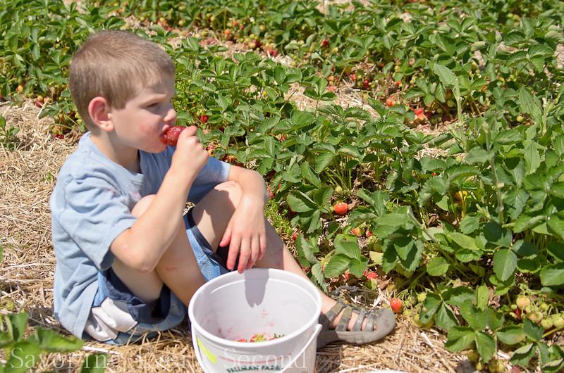 Strawberry Picking 1-031.jpg