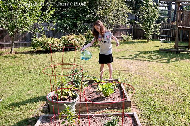 Watering Veggie Garden