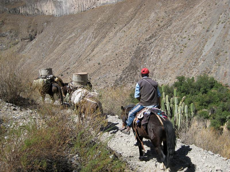 Locals - Colca Canyon - Peru