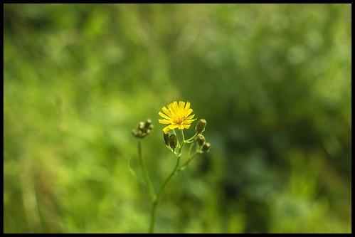 NIKON D800 Nikkor 35mm f/2D lens