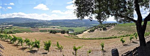 Kunde Estate Mountain Top View Panorama~ Kenwood, CA
