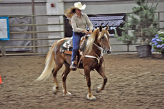 animal sports, rodeo, equestrianism, western riding, mare, equestrian sport, sports, western pleasure, equitation, reining, horse,