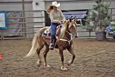 english riding(0.0), stallion(0.0), animal training(0.0), pack animal(0.0), jockey(0.0), animal sports(1.0), rodeo(1.0), equestrianism(1.0), western riding(1.0), mare(1.0), equestrian sport(1.0), sports(1.0), western pleasure(1.0), equitation(1.0), reining(1.0), horse(1.0),