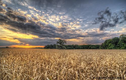 sunset usa tree clouds landscape virginia nikon cloudscapes loudouncounty tomlussier farmsandfoodpec2012