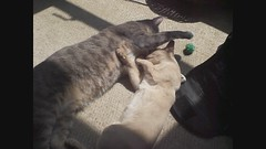 Nims and Mojo in the sun