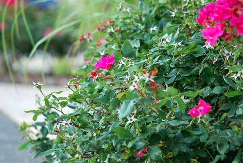 WPIR - shore flowers