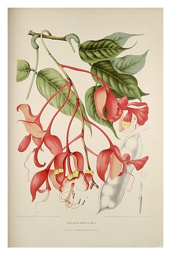 005-Arbol de las orquideas-Fleurs, fruits et feuillages choisis de l'ille de Java-1880- Berthe Hoola van Nooten
