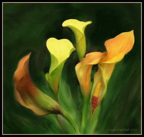 5 callas - painting