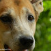 My Beautiful Dog