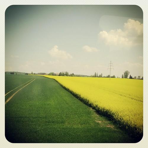 field germany deutschland saxony feld sachsen raps canola instagram samsunggalaxynexus