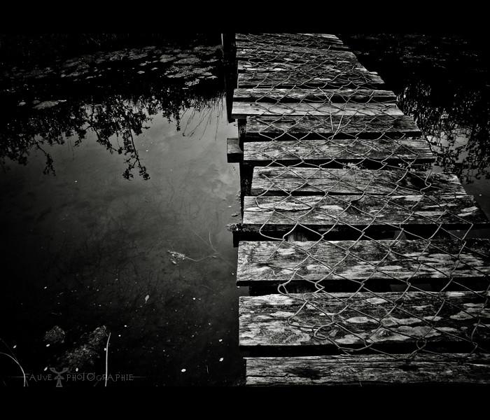[PHOTO] Sur les pas du Bayou