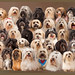 45 Dogs join together by Hans Surfer (where the action is)