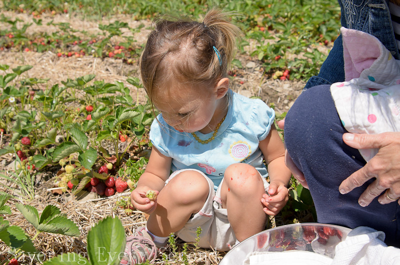 Strawberry Part 2-007.jpg