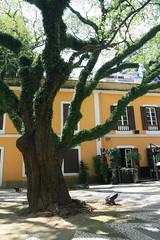 Old Ladies' House