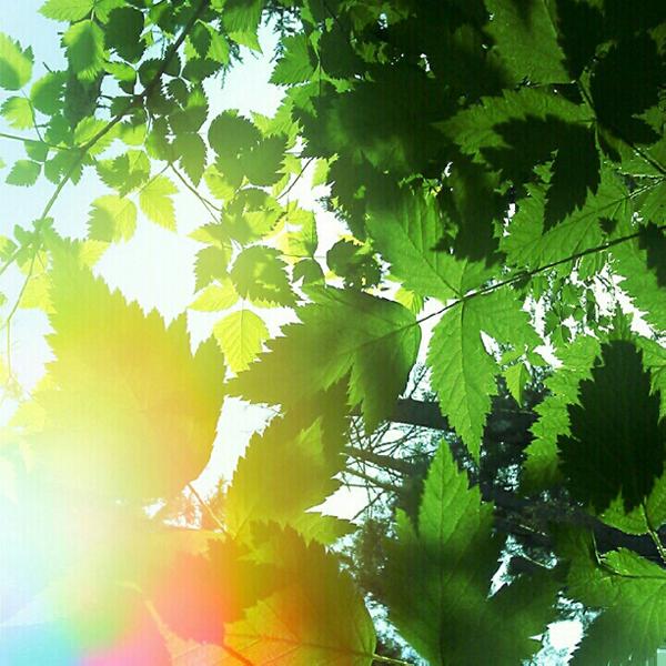 {sunlight}