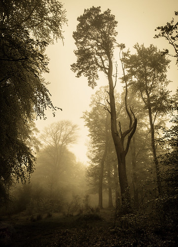 chris mist tree canon woodland walking photography scotland woods may huge shanks midlothian penicuik