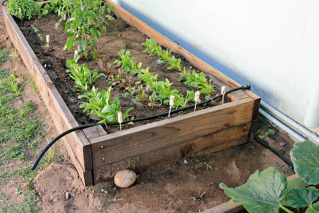 Diy irrigation system flickr photo sharing - Diy drip irrigation systems ...