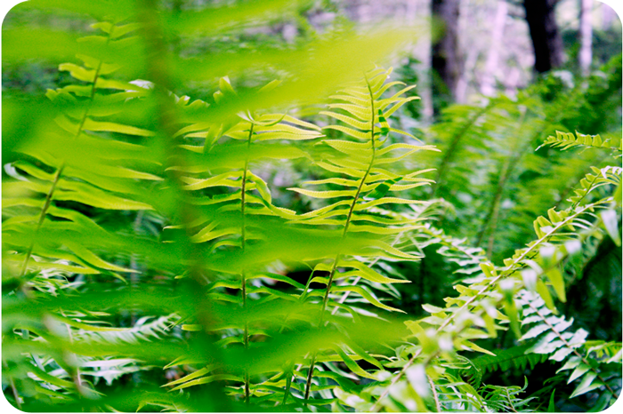 {happy ferns}