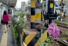 線路沿いの花