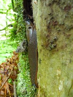 Garden Slug & Moth