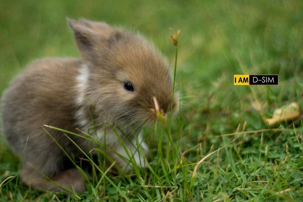 Baby Rabbit (6)